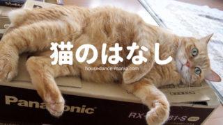 可愛いネコの写真